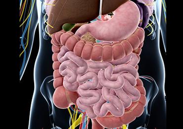Cómo se relacionan el colon y la vesícula