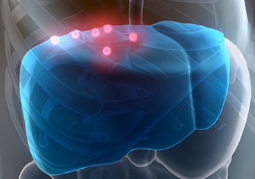 ¿Cómo funciona el hígado?
