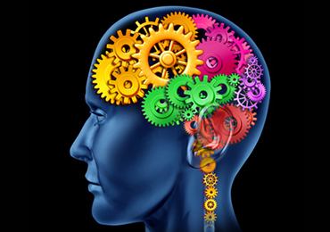 El aparato digestivo: el segundo cerebro