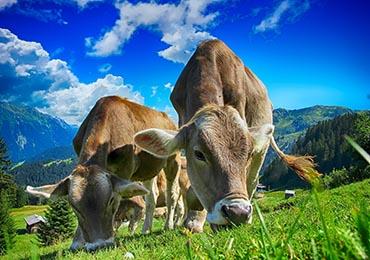 Beneficios de los alimentos bio o ecológicos