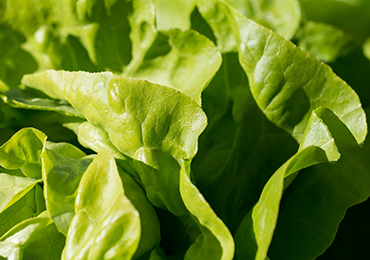 Dichos populares relacionados con la comida y su relación con la salud
