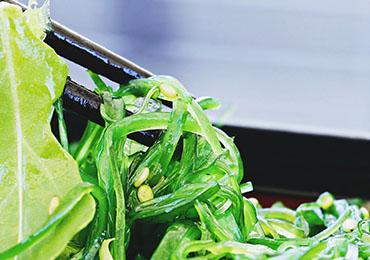 Mejora tu salud intestinal con el alga Chlamydomonas reinhardtii