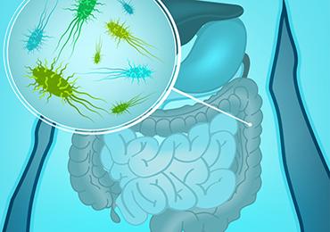 ¿Qué es la microbiota? ¿Qué funciones tiene? ¿Cómo mantener la microbiota sana?