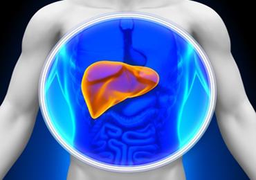 Cuida tu hígado, el órgano vital